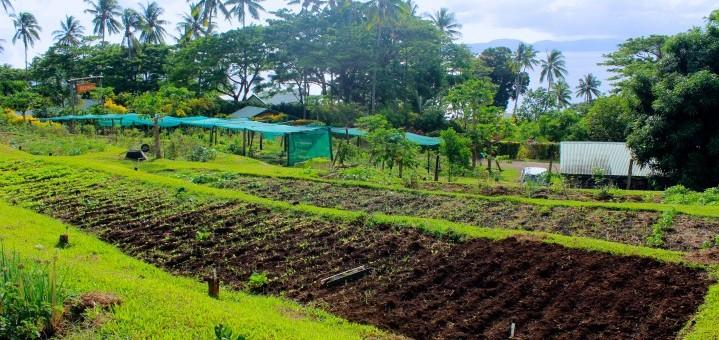 Nakia organic garden