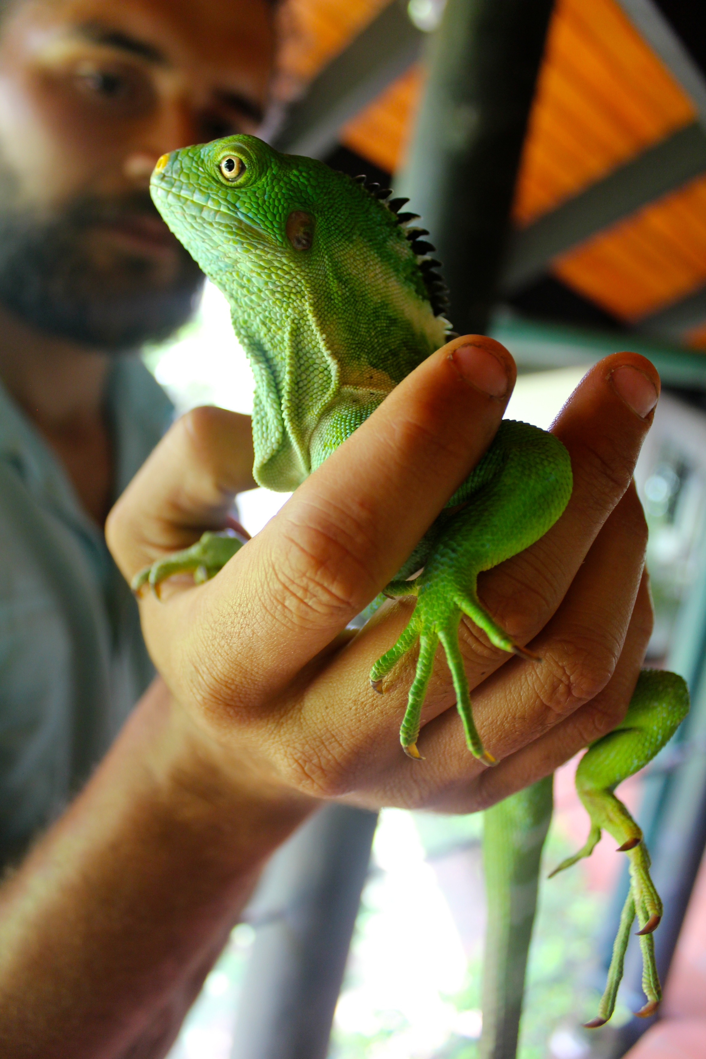 Jack with the Fijian Crested Iguana
