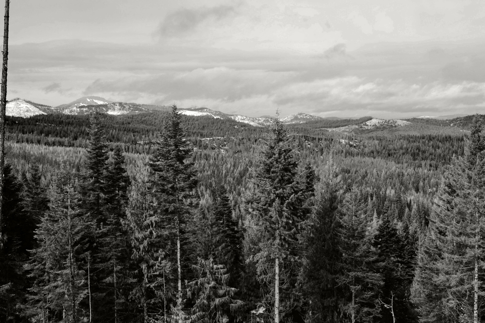 All Rights Reserved: Heather Woolery 2016 | Idahome: Snowshoe Views