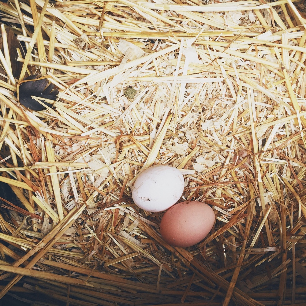 Eggies in a basket | March 2016 | All Rights Reserved: Heather Woolery 2016