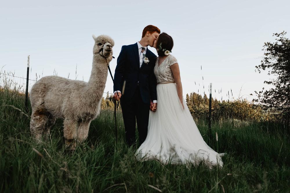 Alpaca_alpacabridals-22.jpg