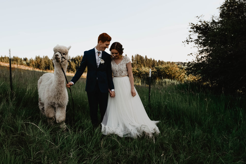 one of my 2018 couples who included these furry sweet guys to their bridals session