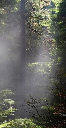 foresthaze.jpg