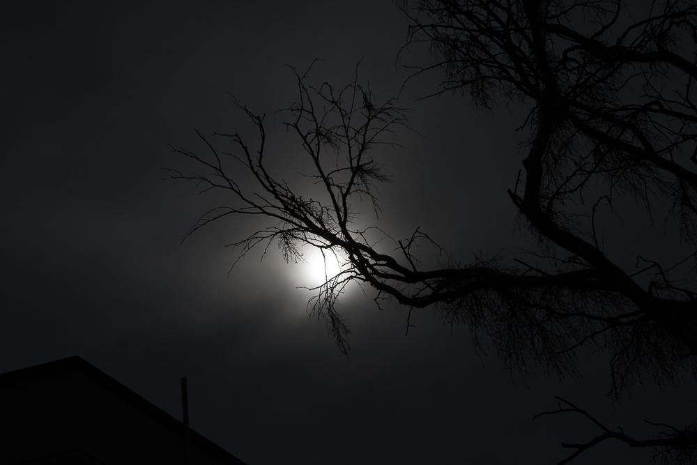 CRW_0916-1:the wizard's tree.jpg