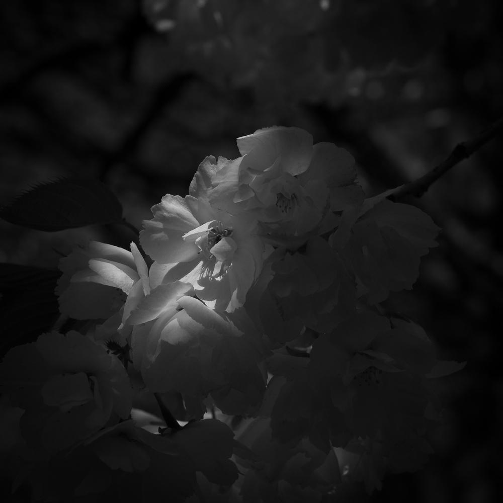 PA060125-1:la serenade blanche*.jpg