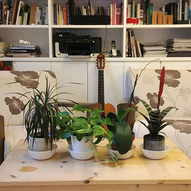 Alternative Brio Team . . . #brio_design #studio_life #plantsmakepeoplehappy