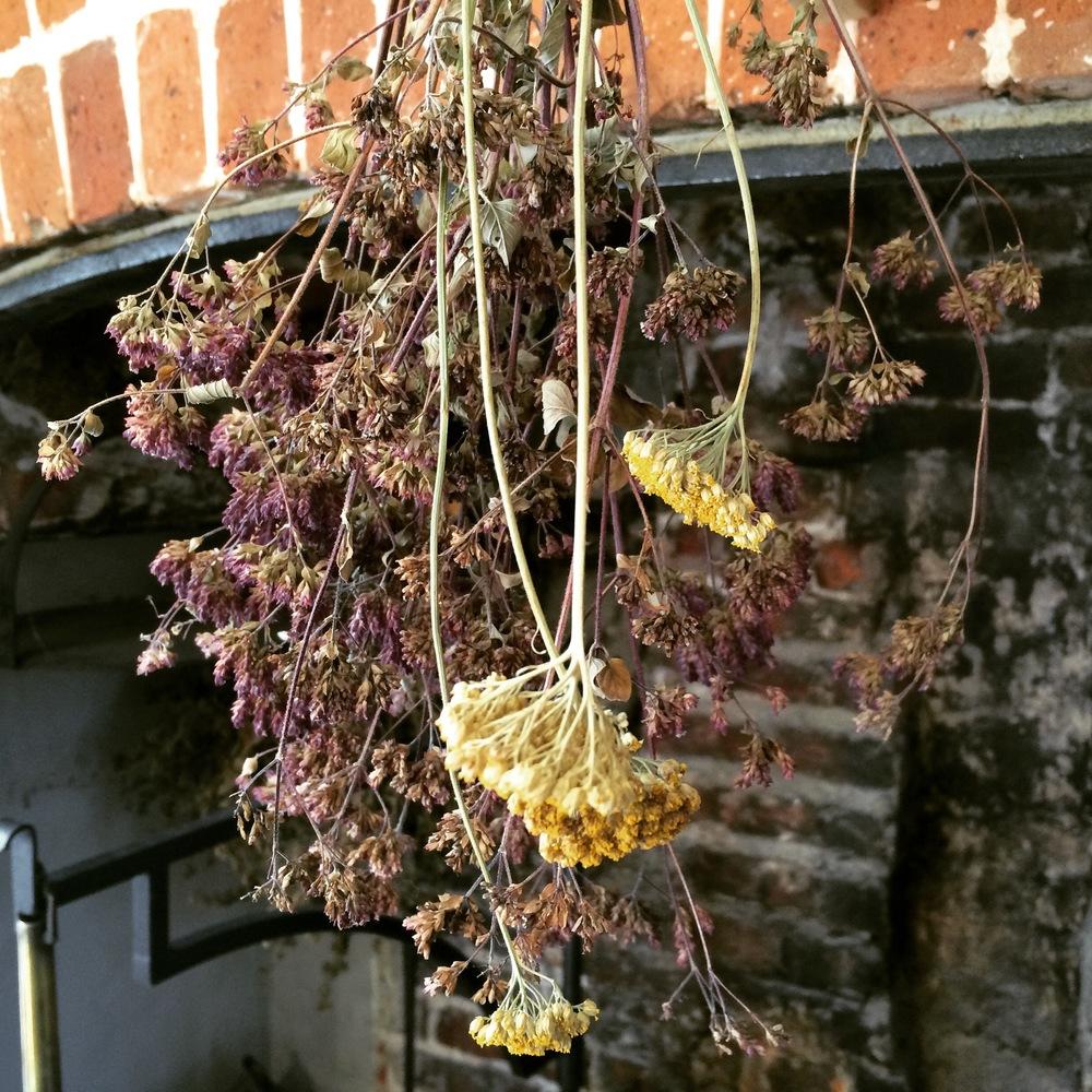 Dried Flowers at Jane Austen's House.JPG