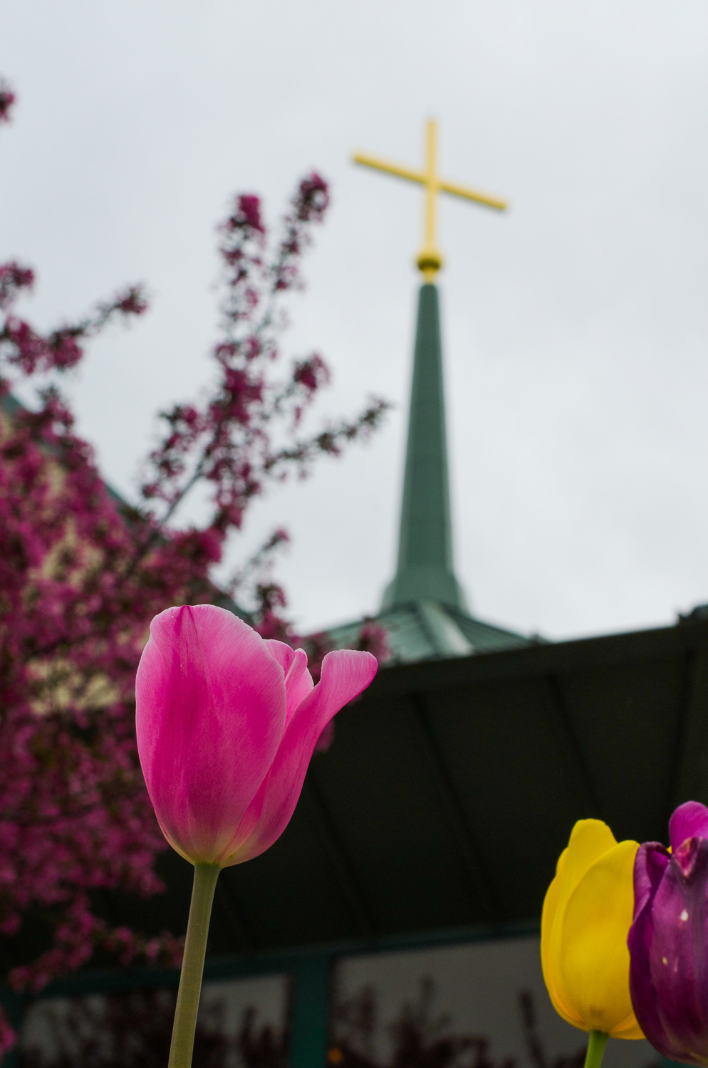 Tulips were perfect at the church