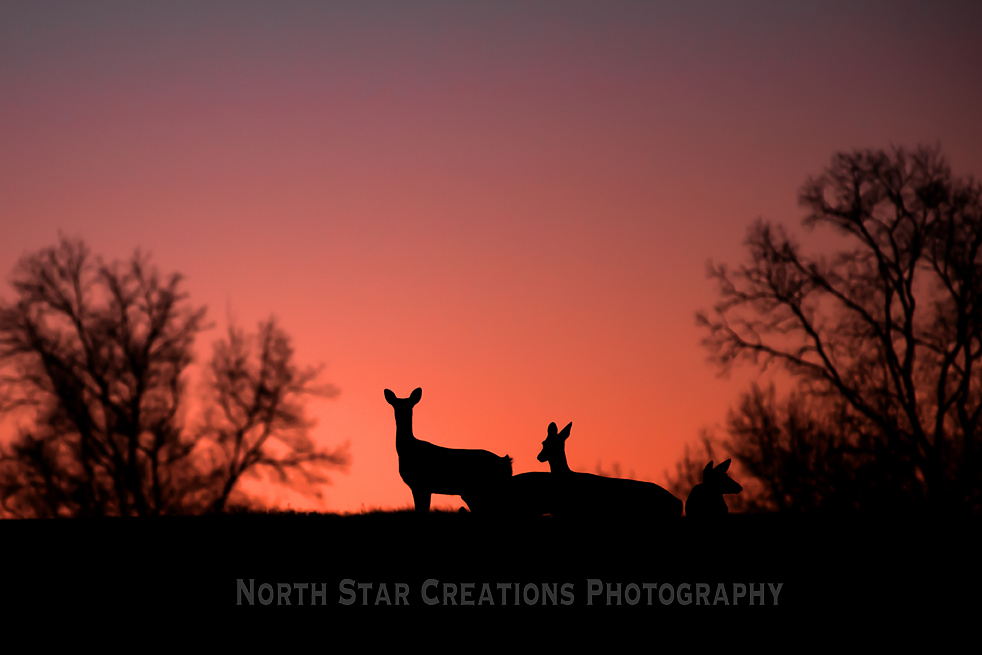 0218 deer sunset copy.jpg