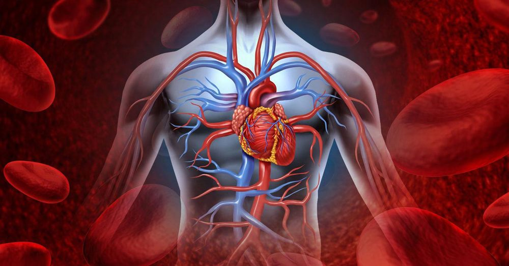 Vascular Health and Vitamin C