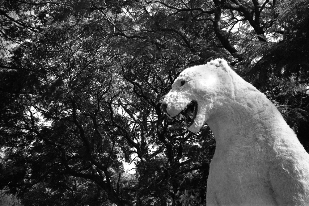 Polar bear in Bosque de Chapultepec, Mexico City 2012
