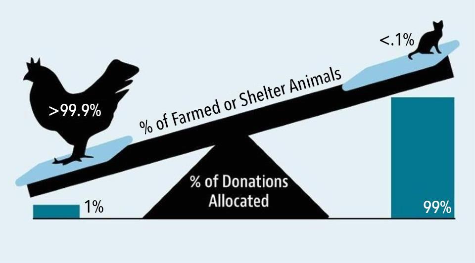 Landbruksdyr    utgjør    det overveldende flertallet av dyr brukt av mennesker, men får bare en liten brøkdel av dyrevernsrettede donasjoner.