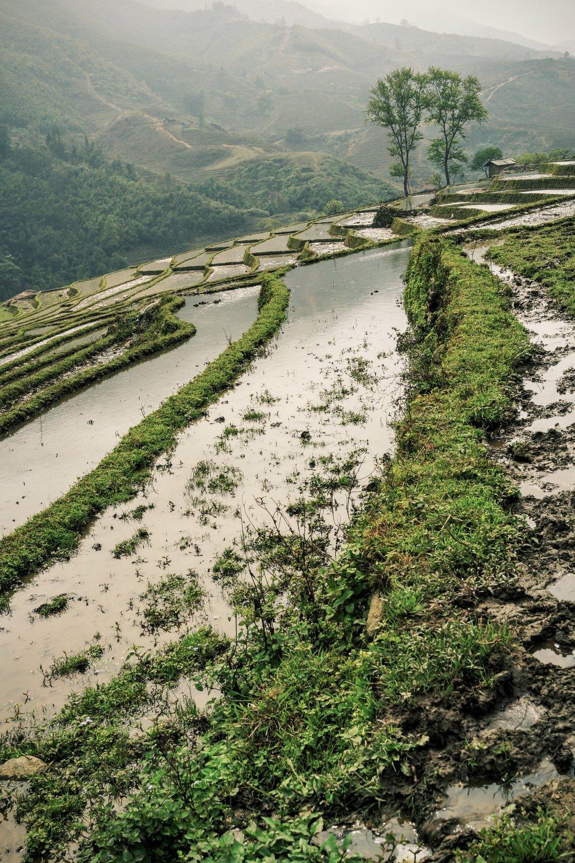 Risåker i Asia