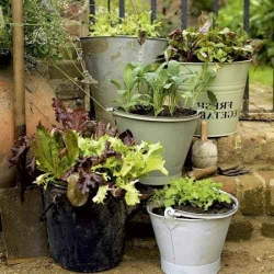 Old Buckets as Planters