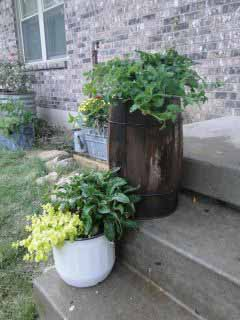 Barrel planter.jpg