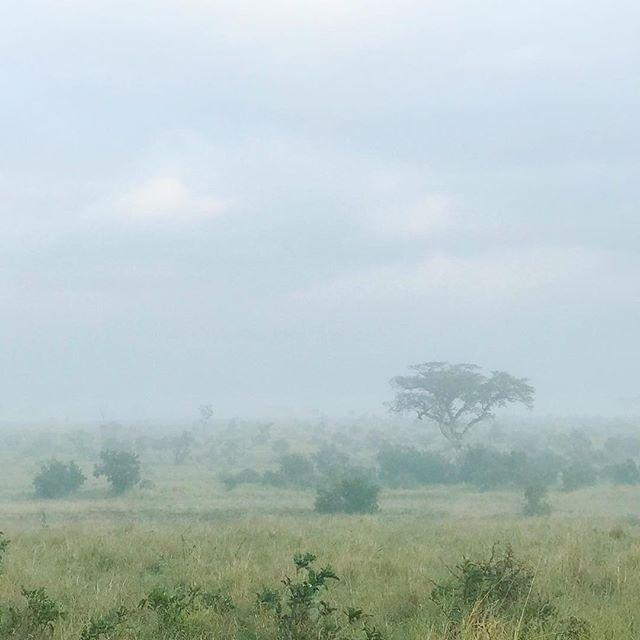 Kruger Park in the morning mist 🐨☕️ #adventuretime #AdventureCulture #adventureisoutthere #outdooradventurephotos #nakedplanet #roamtheplanet #natureisbeatutiful #moodygrams #agameoftones #landscapephotography #allnatureshots #mypixeldiary #naturephotography #moodyapertures #fog #mist #misty #foggymorning #nature_seekers #naturegram #culturetrip #amongthewild #naturewhisperers #southafrica #krugernationalpark #africa