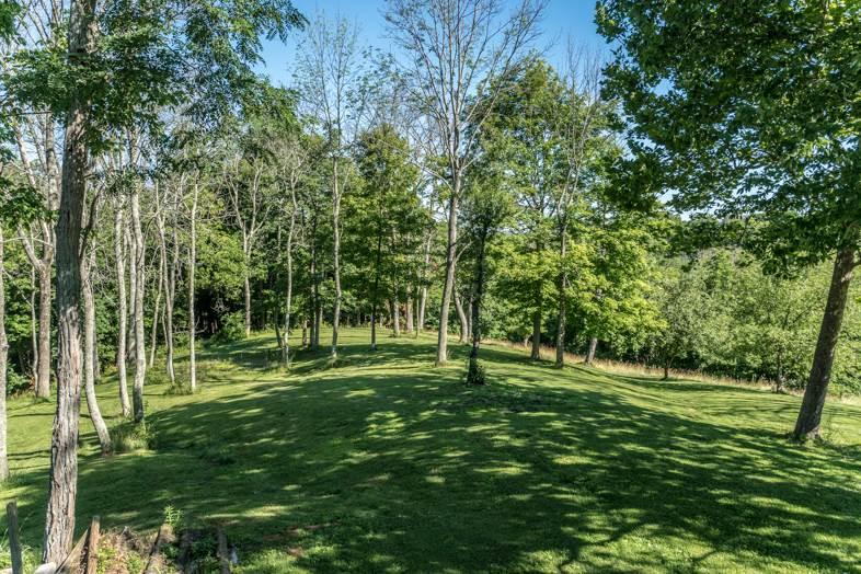 Seneca Reserve - Woods.jpg