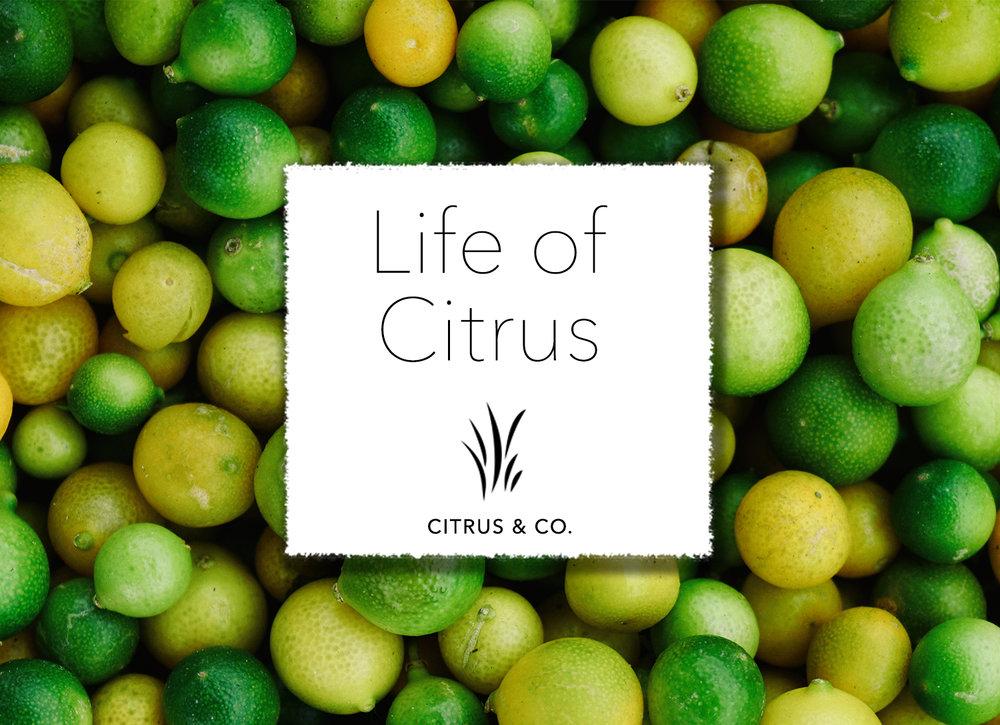 Life of Citrus.jpg