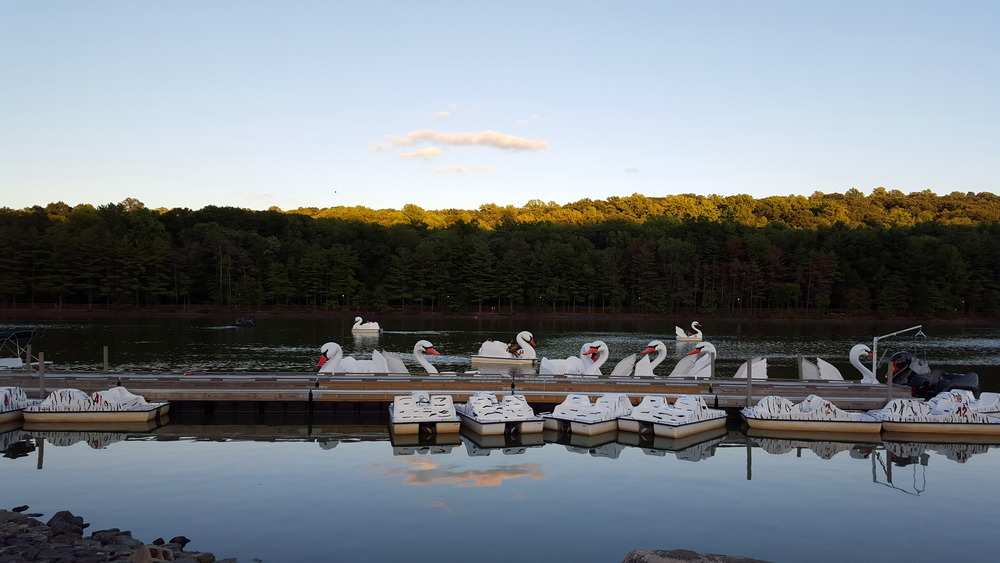 The swan paddle boats I dreaded so much. (I actually want to go in one....shhh....don't tell anyone.)