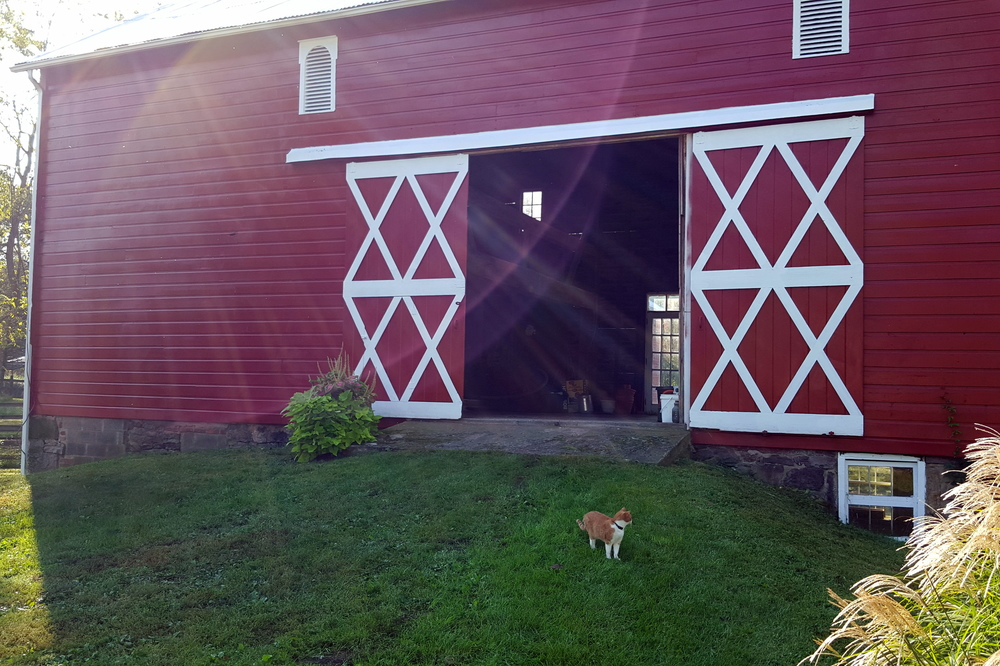 Barn Cat at Little Big Farm