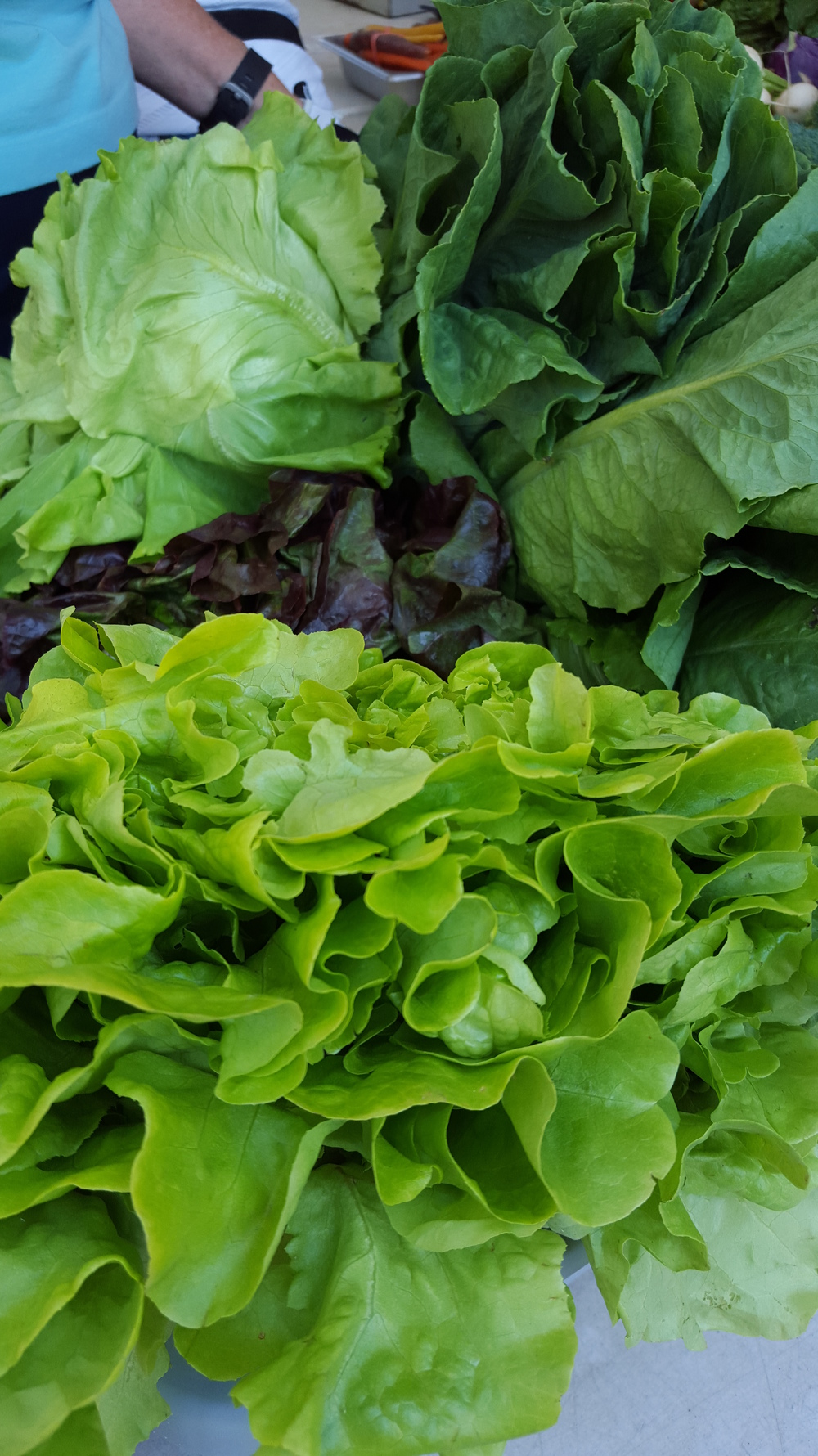 Circle Brook Farm Greens