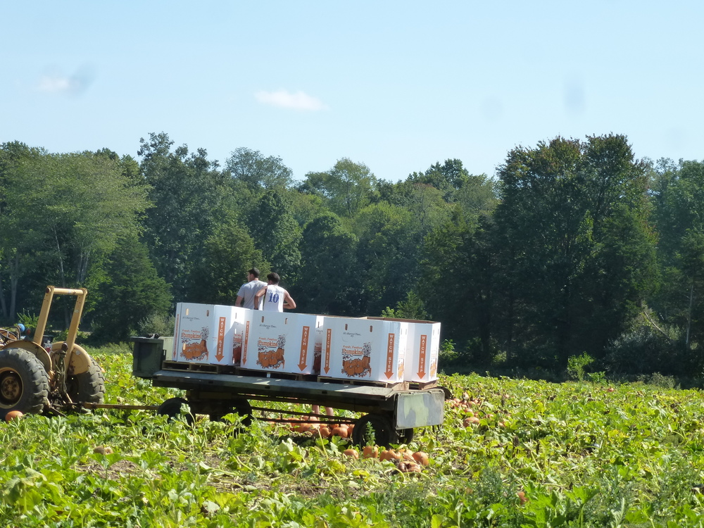 Saw along the road...packing pumpkins for our enjoyment at markets