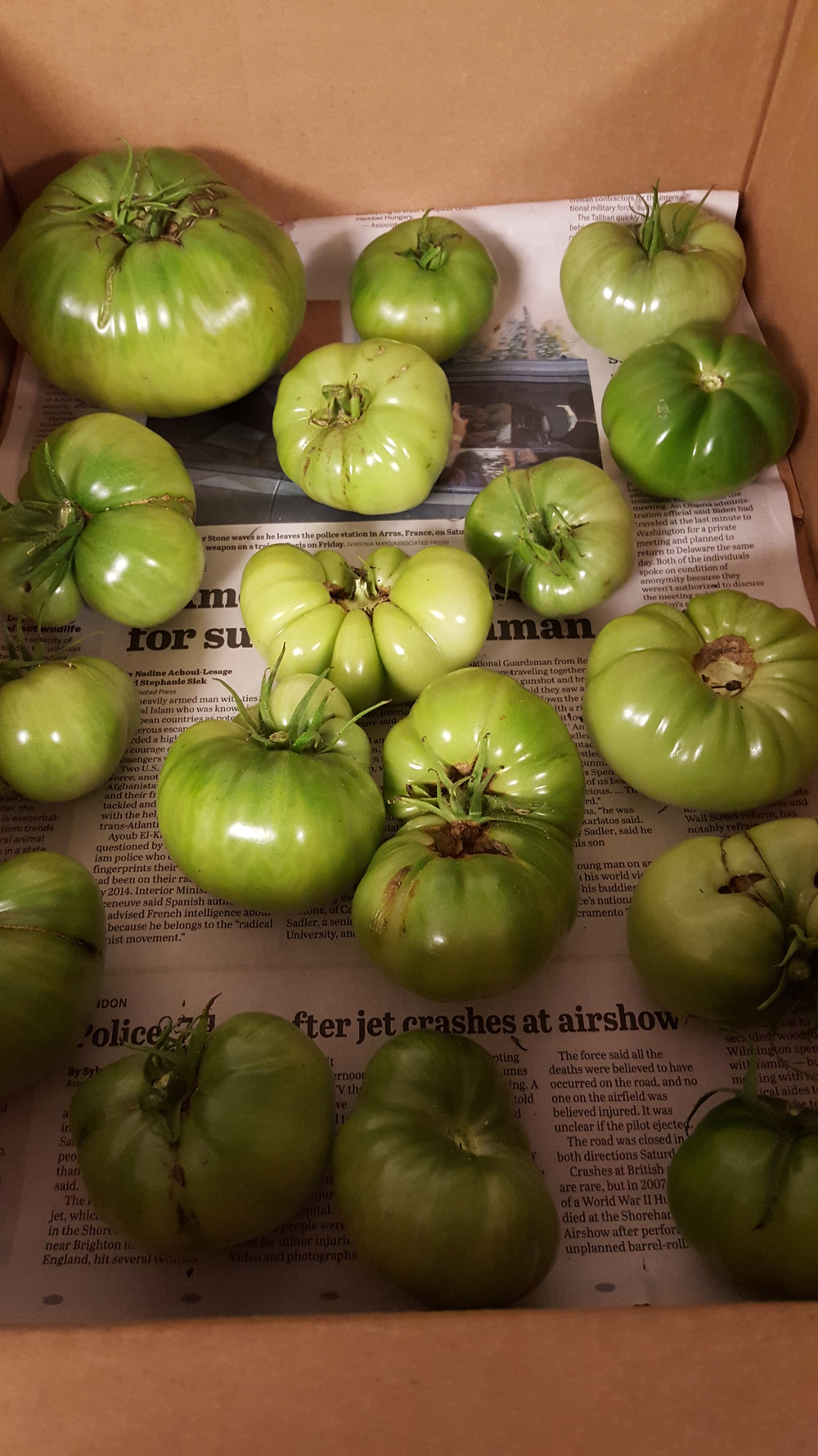 ripen tomatoes indoors
