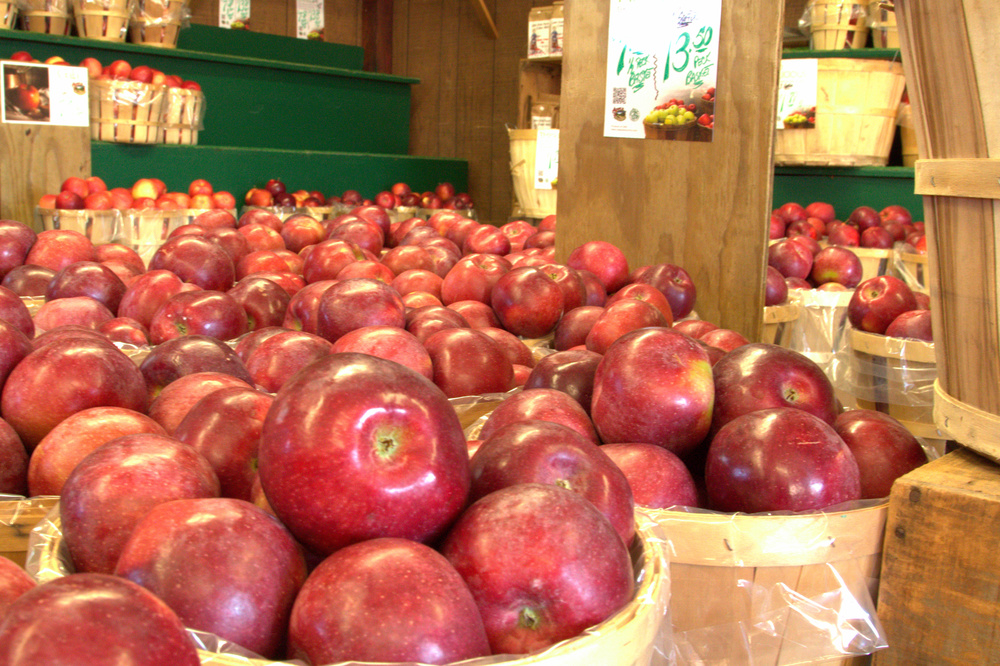 A sea of apples in the Apple Barn