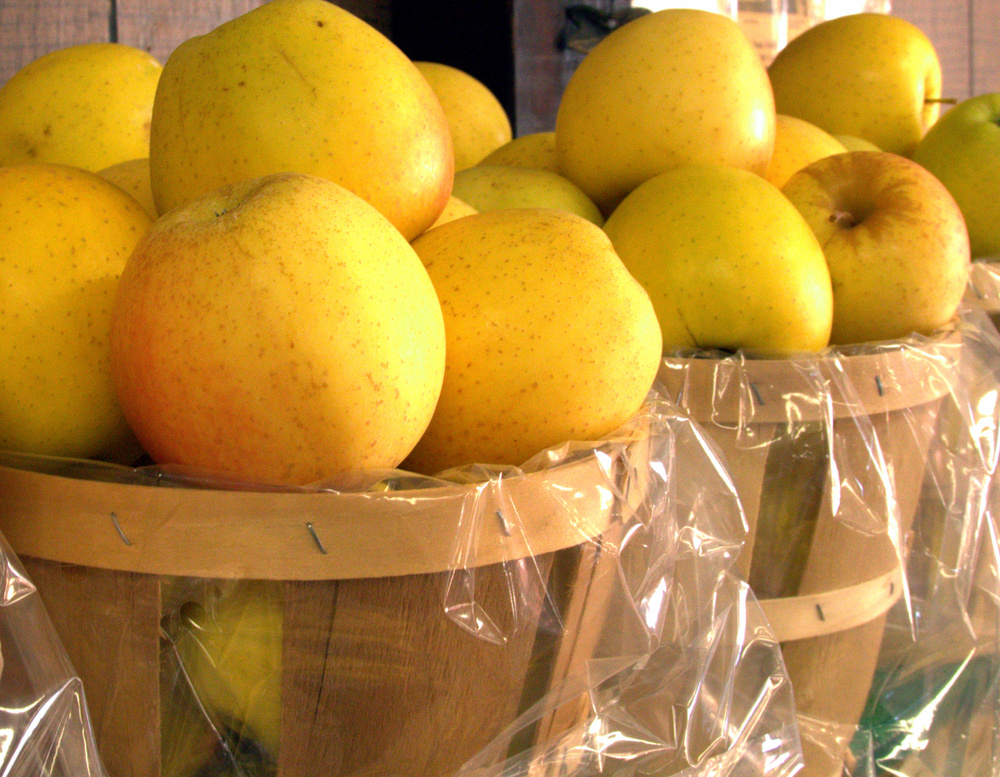 Golden delicious apples I got at Lakeside Farms in Ballston Spa, NY