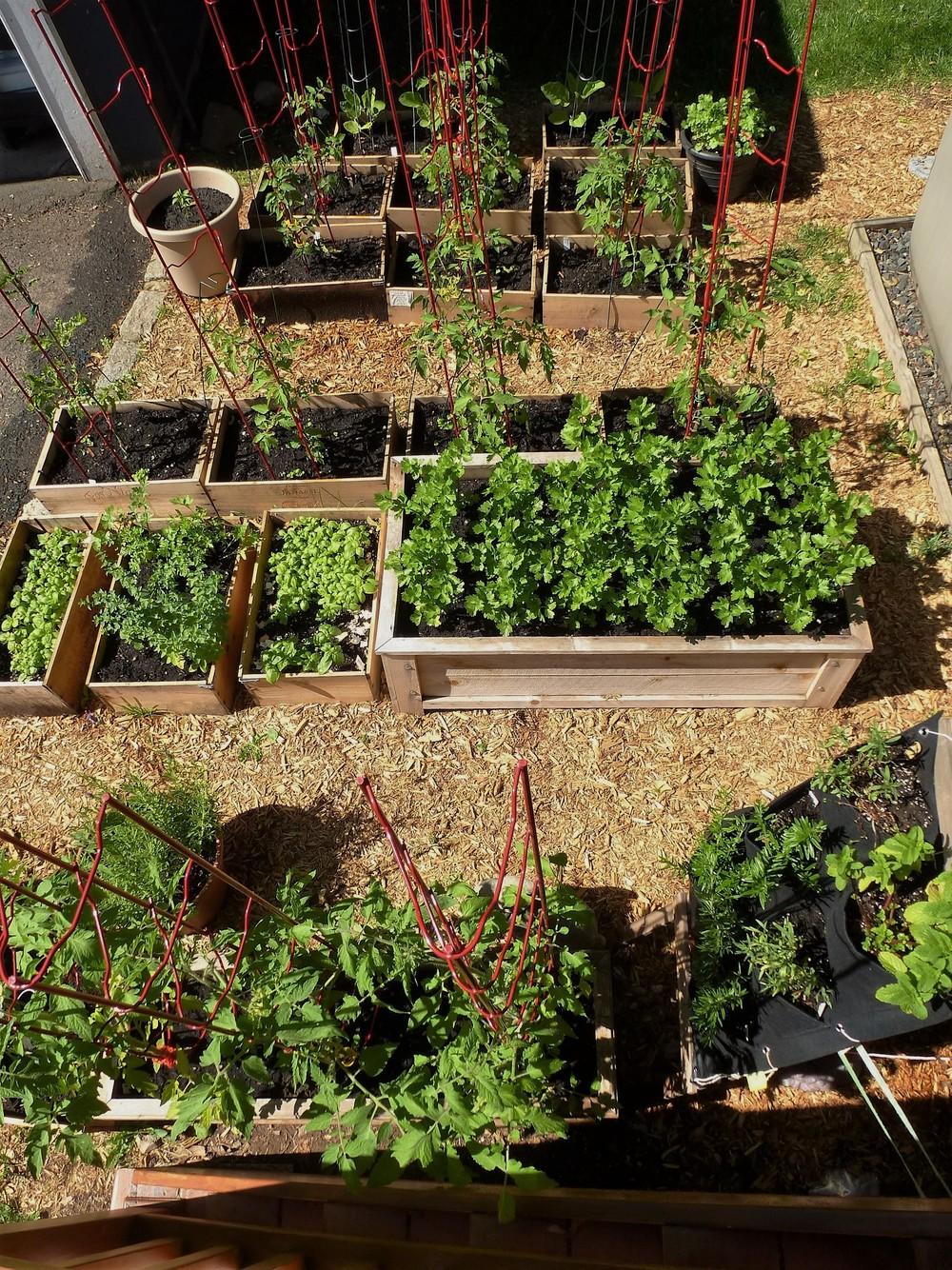 the-wine-box-garden