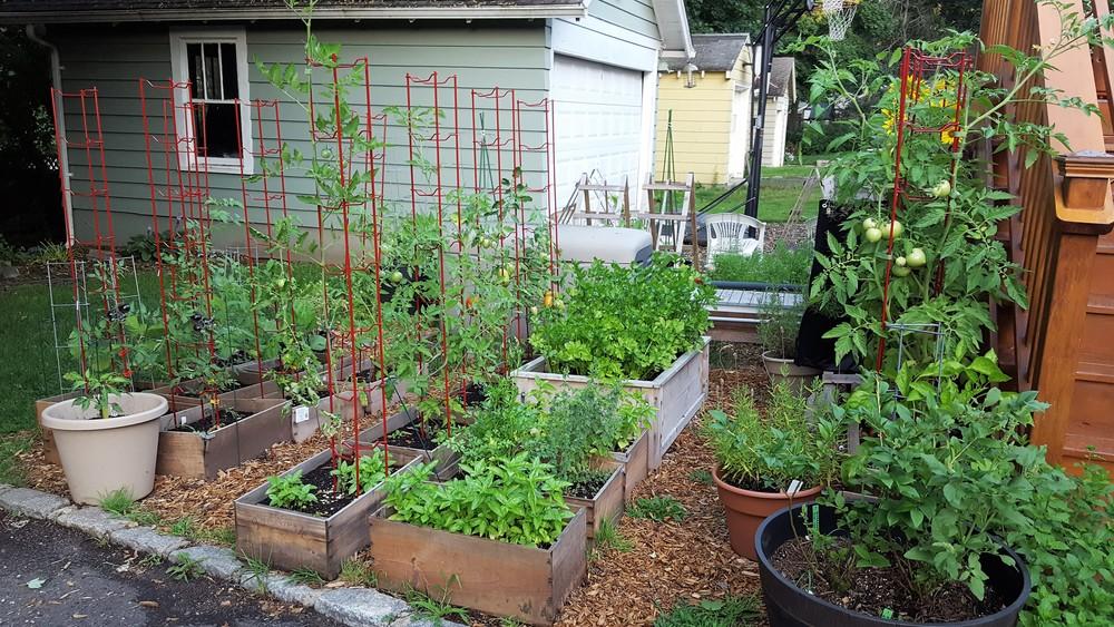 Garden - Back