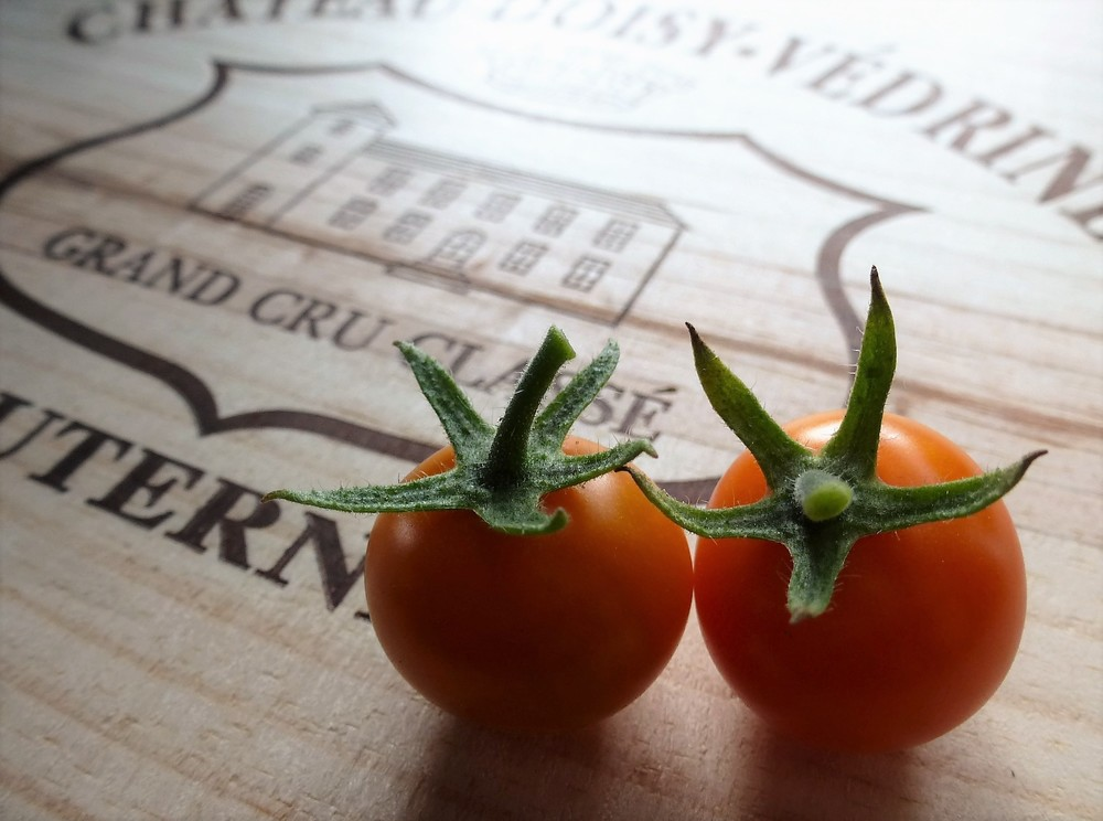 My VERY first tomatoes of the season - Sun Gold tomatoes