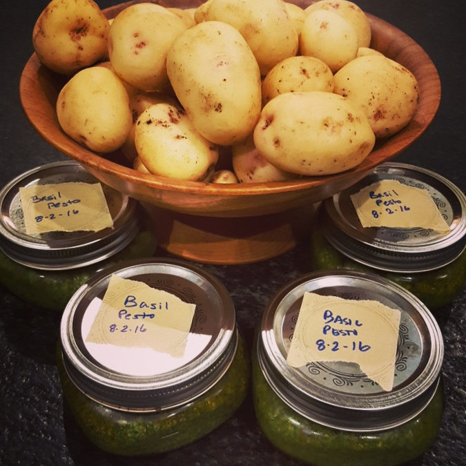 My Yukon Gold potatoes and a batch of basil pesto