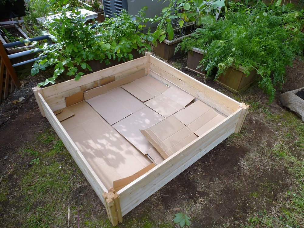 Step 3: Layer the bottom with cardboard to prevent grass/weeds from coming up through the bed.