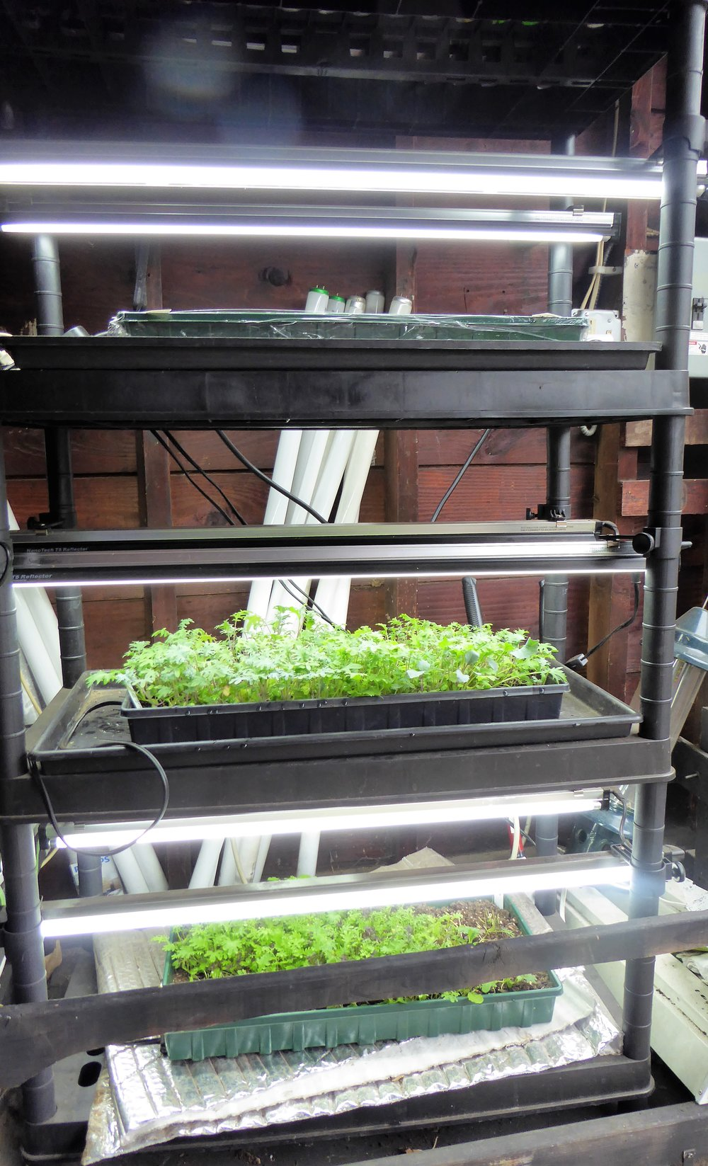 One of my grow light systems.