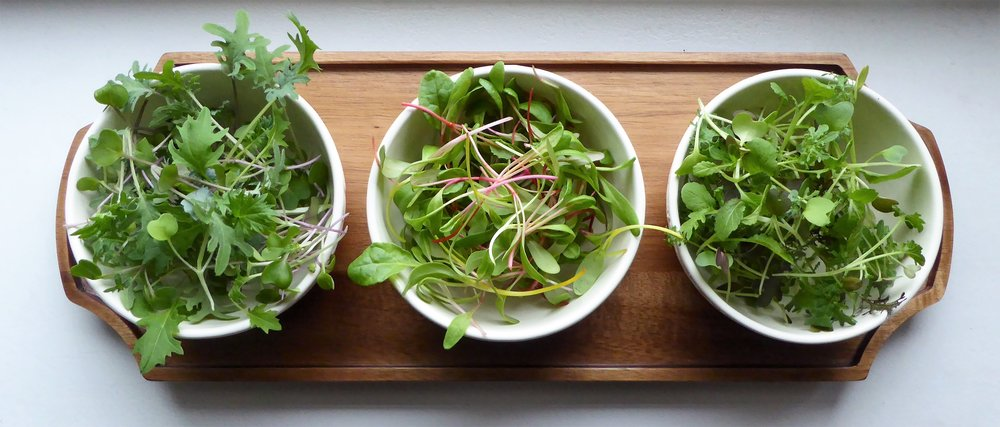 I recently grew three different kinds of microgreens: Spicy Mix, Rainbow Chard, and Mild Mix