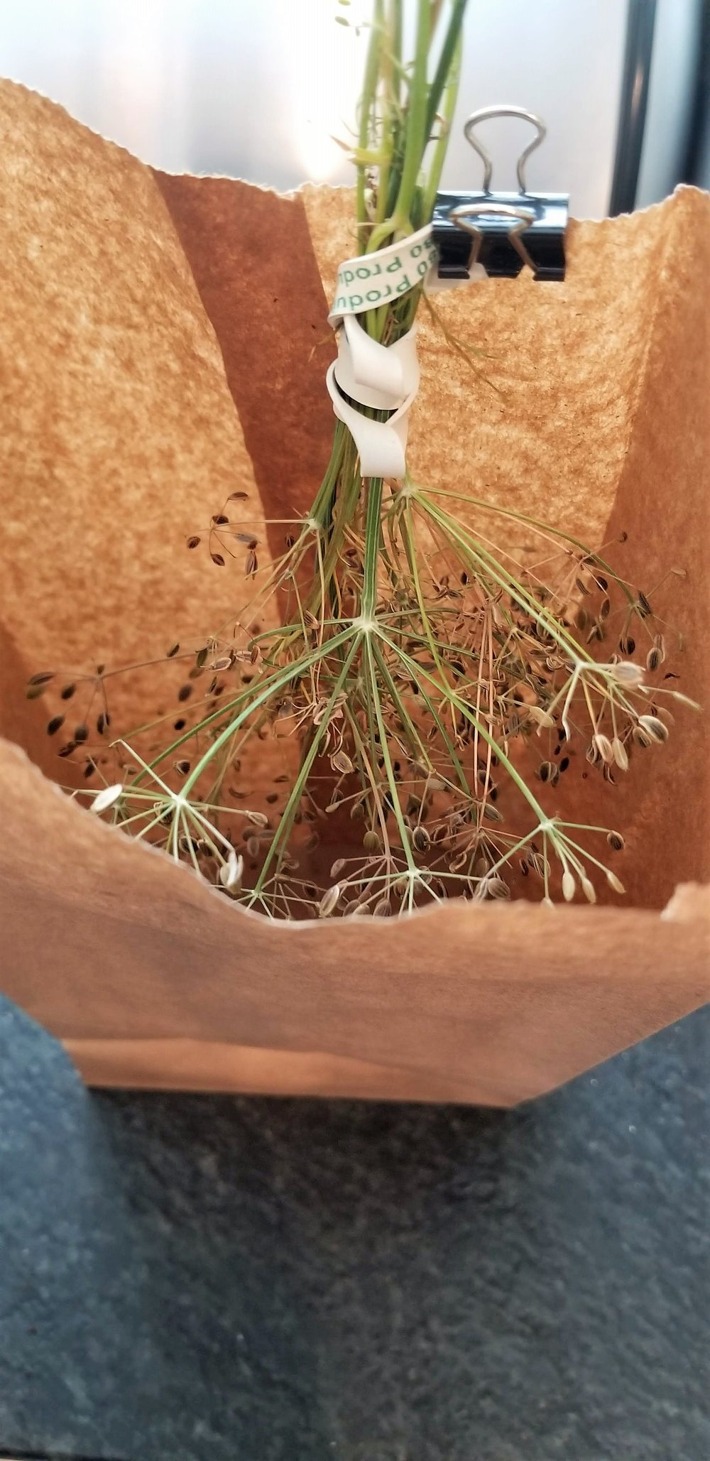 Hang bunches of seeds inside a paper bag to dry