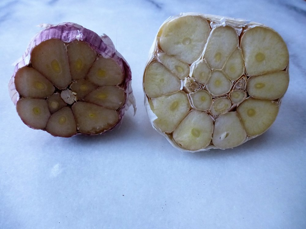 Hardneck garlic (left) and Softneck garlic (right)