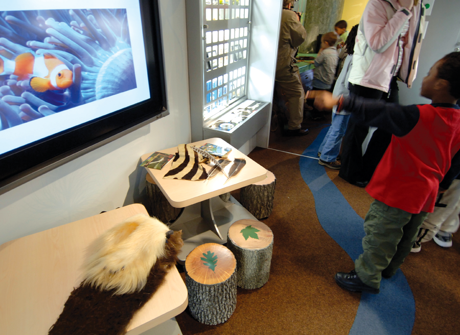 Even furniture is made to simulate native tree species so students can  touch, compare and contrast.