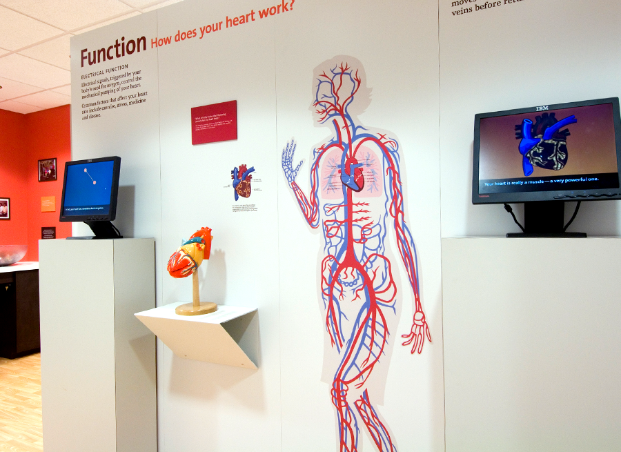 To help ease the vast amounts of reading the client wanted the viewer exposed to, we created two animations focused on the circulatory and electrical system. The content for these animations totaled more than 300 pages of text! Click below to view.