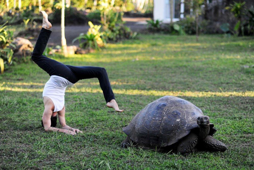 Forearm Balance & Turtle - Small.jpg