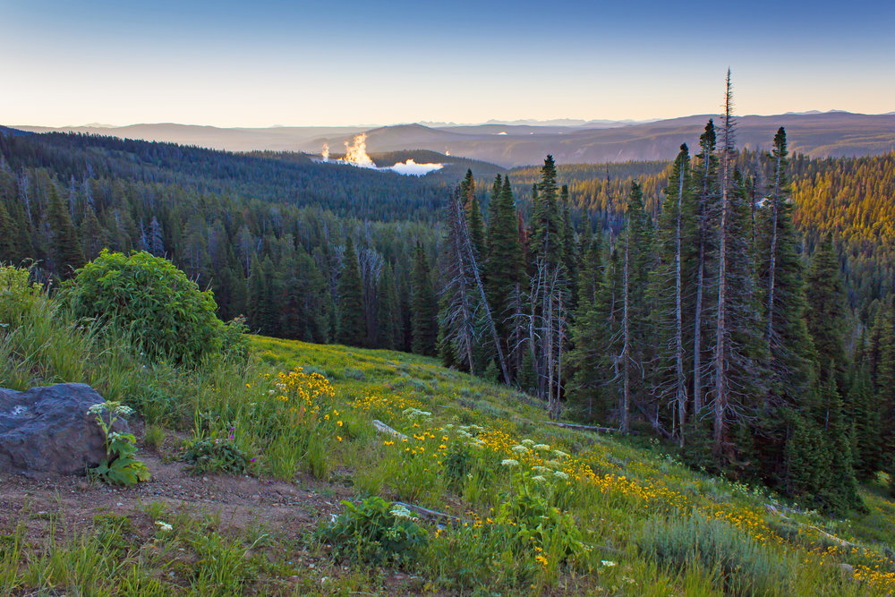 Yellowstone National Park at sunrise.