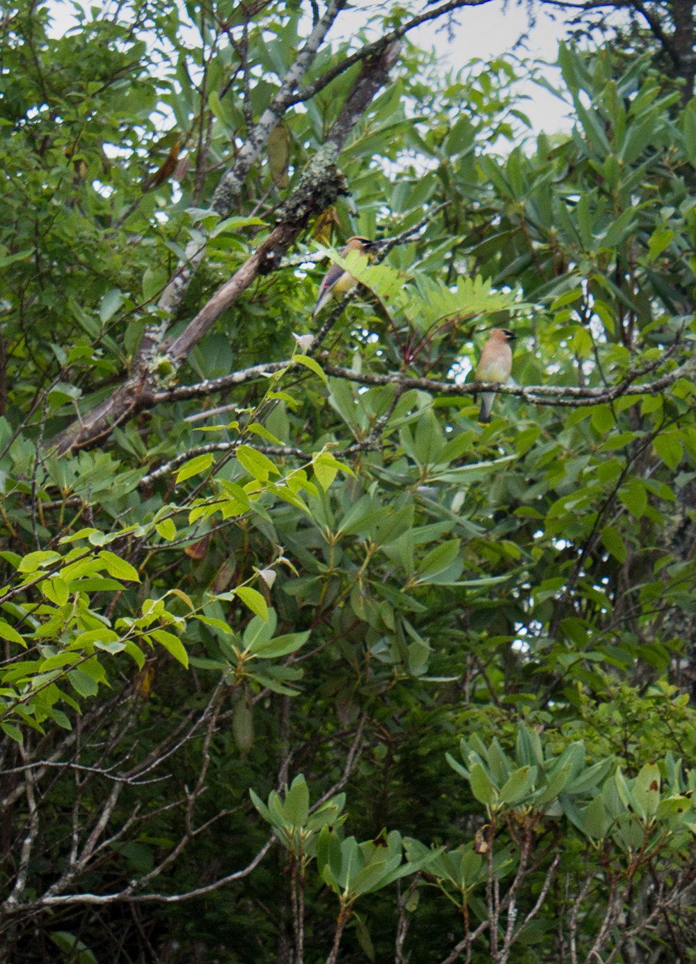 Black Balsam -24.jpg