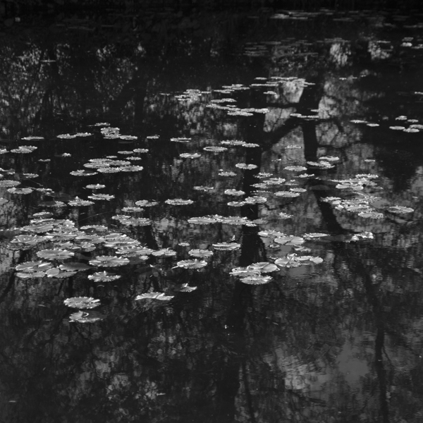 hommage to claude monet:  water lilies
