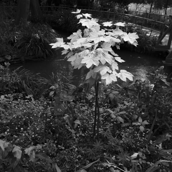 hommage to claude monet:  monet garden