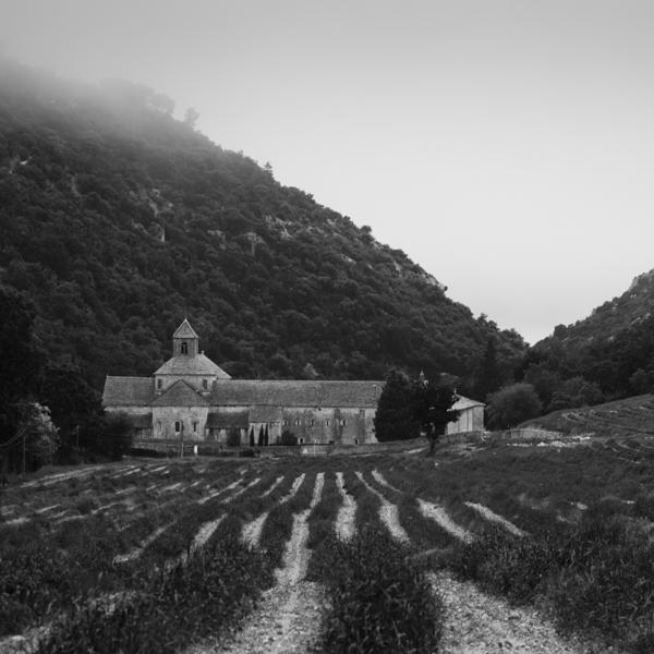 notre-dame de sénanque and lavender field
