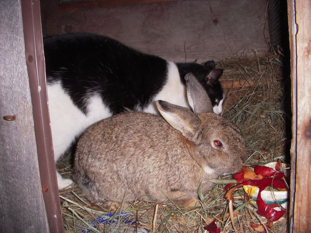 Slim Jim and Coffee are snuggled up in Coffee's hutch.