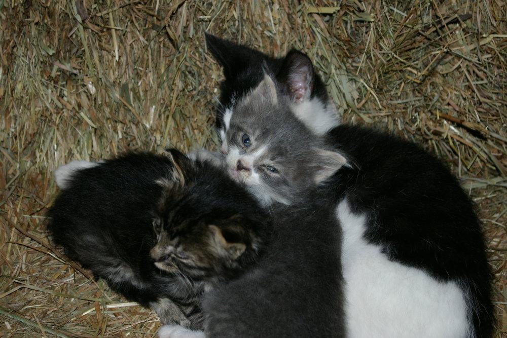 2008 september kittens 006.jpg