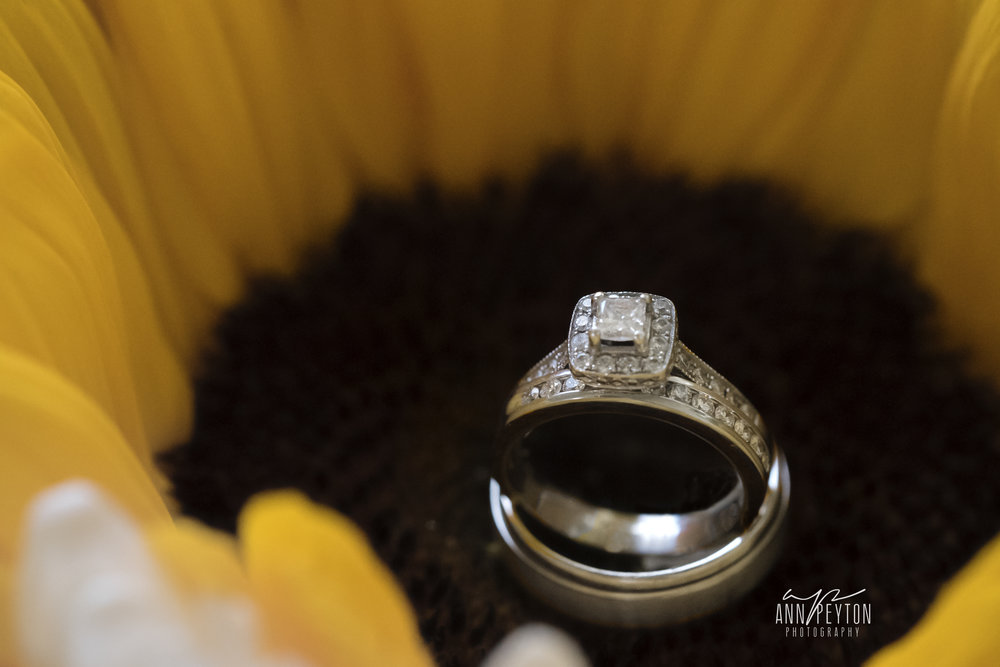 wedding rings in sunflower_DSC9686.jpg