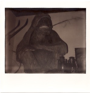 the merc monkey. Polaroid:   Hannah Oreskovich